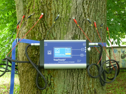 Tree with TreeTronic device